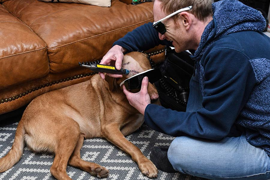 Laser Therapy, Dogs, Animals, Pets, Sudbury, Suffolk