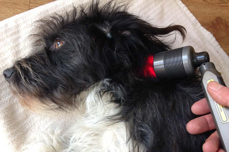 Suffolk Animal Chiropractor