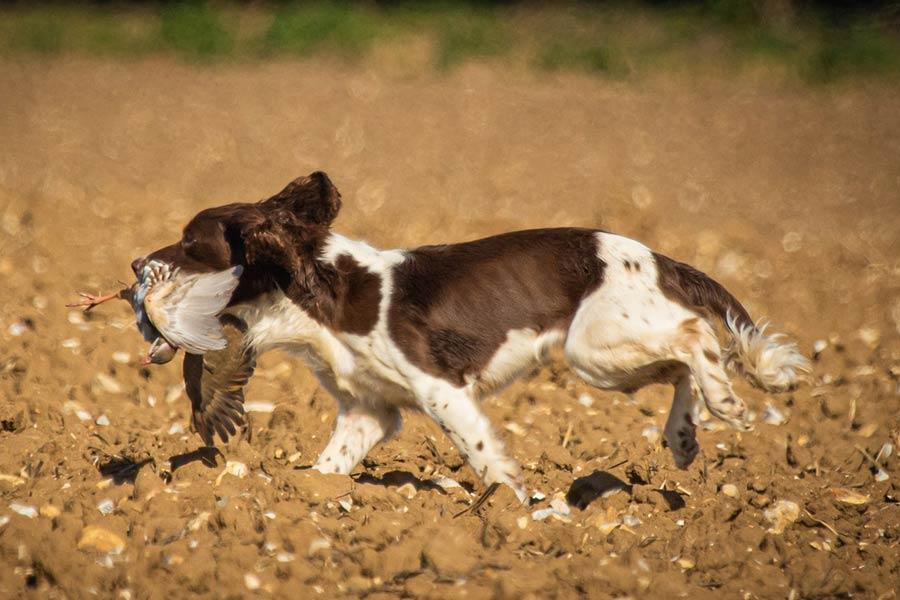 Working Dogs, Care, Sudbury, Suffolk